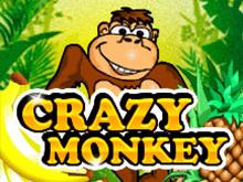 Crazy Monkey в клубе Вулкан Платинум