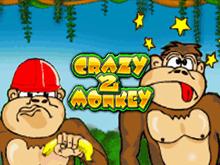 Без смс демо Crazy Monkey 2