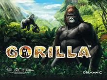 Игры без регистрации Gorilla